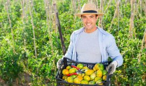 Read more about the article SUBMASURA 6.1 – Sprijin pentru instalarea tinerilor fermieri